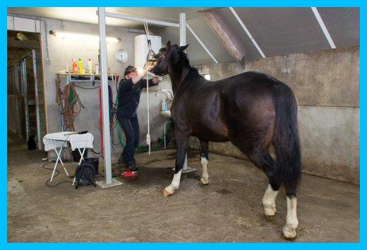 Gebitsbehandeling paard in Lemele