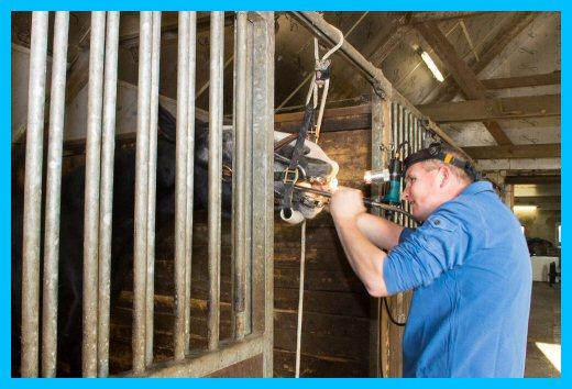 Gebitsbehandeling paard bij u thuis