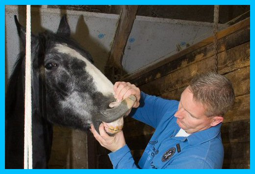 Inspectie paardengebit
